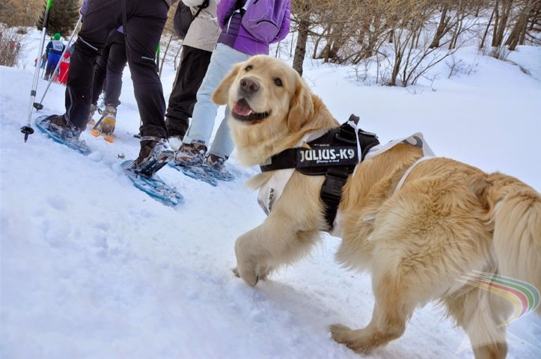 Family dog joining snow cross country in Pragelato Vialattea Italy